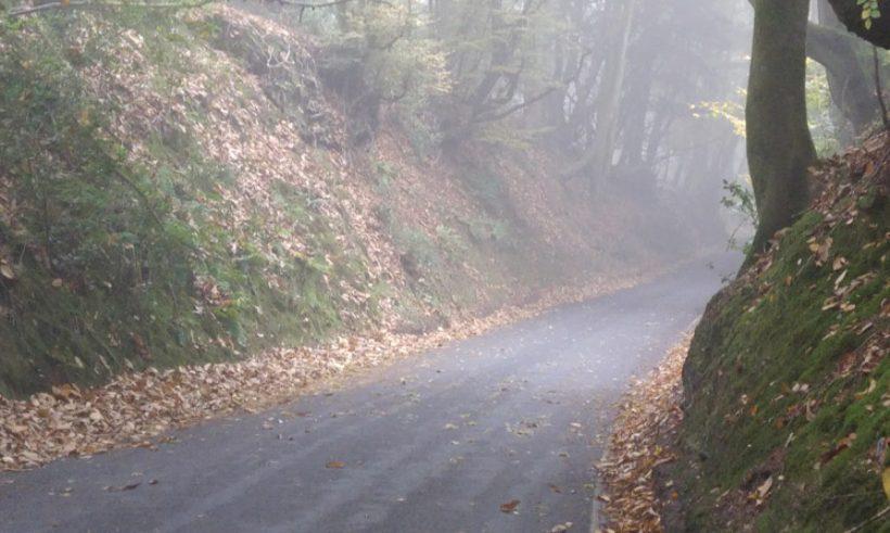 cropped-sunker-lane-leith-hill.jpg